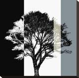 Elm Stripe Stretched Canvas Print by Sarah Cheyne