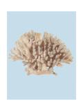 Coral I Giclee Print by Sloane Addison