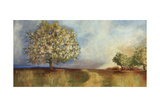 Apple Orchard Giclee Print by Andrew Michaels