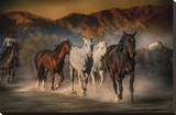 Mustangs on the Move Stretched Canvas Print by Bobbie Goodrich