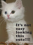 Kitten - It's Not Easy Tin Sign