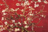 Almond Blossom - Red Poster van Vincent van Gogh