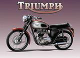 Triumph Bike Blechschild