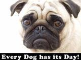 Every Dog Has it's Day Plechová cedule