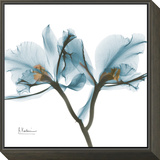 Orchids in Blue Framed Print Mount by Albert Koetsier