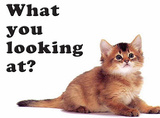 What You Looking At - Brown Cat Tin Sign