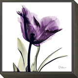 Royal Purple Parrot Tulip Framed Print Mount by Albert Koetsier