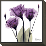 Royal Purple Gentian Trio Framed Print Mount by Albert Koetsier