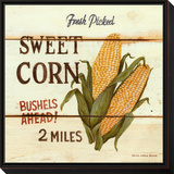 Fresh Picked Sweet Corn Framed Print Mount by David Carter Brown