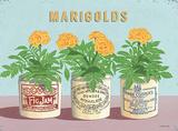 Marigolds Tin Sign