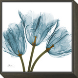Tulips in Blue Framed Print Mount by Albert Koetsier