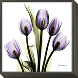 Tulip in Purple Framed Print Mount by Albert Koetsier