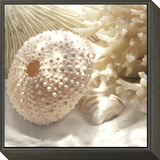 Coral Shell I Framed Print Mount by Donna Geissler