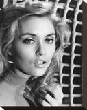 Alexandra Bastedo Stretched Canvas Print