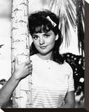 Dawn Wells Stretched Canvas Print