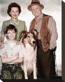 Jon Provost - Lassie Stretched Canvas Print