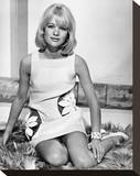 Judy Geeson - Hammerhead Stretched Canvas Print