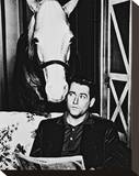 Mr. Ed Stretched Canvas Print