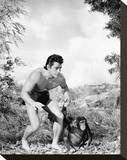 Gordon Scott, Tarzan's Fight for Life (1958) Stretched Canvas Print