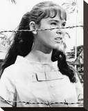 Yvonne Craig, Seven Women from Hell (1961) Stretched Canvas Print