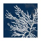 Coastal Coral I Premium Giclee Print by Lanie Loreth
