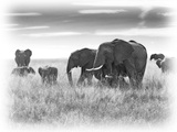 Eles Photographic Print by Sarah Farnsworth