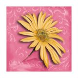 Blooming Daisy II Premium Giclee Print by Patricia Quintero-Pinto