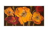 Dazzling Poppies II (Black) Posters by  Josefina