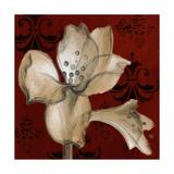 Amaryllis on Red I Premium Giclee Print by Lanie Loreth