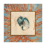 Coral Medley Shell II Prints by Lanie Loreth