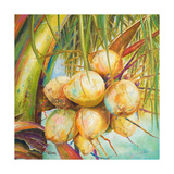 Patricia's Coconuts I Giclee Print by Patricia Pinto