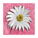 Blooming Daisy III Premium Giclee Print by Patricia Quintero-Pinto