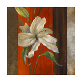 Lily in Bloom I Giclee Print by Lanie Loreth