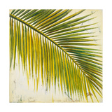 Barú Palm III Premium Giclee Print by Patricia Quintero-Pinto