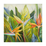 Bird of Paradise I Giclee Print by Patricia Quintero-Pinto