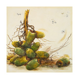 Racimo de Cocos I Giclee Print by Patricia Pinto
