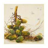 Racimo de Cocos I Giclee Print by Patricia Quintero-Pinto
