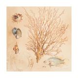 Coral Medley II Prints by Lanie Loreth