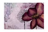 Pressed Flowers I Premium Giclee Print by Patricia Quintero-Pinto