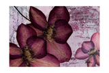 Pressed Flowers II Premium Giclee Print by Patricia Quintero-Pinto