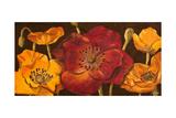 Dazzling Poppies I (Black) Prints by  Josefina