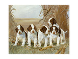 Belle's Pups Giclee Print by Ruane Manning