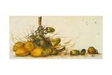 Racimo de Cocos III Giclee Print by Patricia Quintero-Pinto