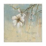 Cherry Blossom I Giclee Print by Patricia Pinto