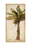 Tropic Banana II Giclee Print by Patricia Pinto