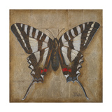 Butterfly I Premium Giclee Print by Patricia Quintero-Pinto