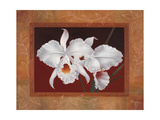 White Orchids Giclee Print by Vivien Rhyan