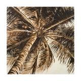 Coconut Palm II Premium Giclee Print by Patricia Quintero-Pinto