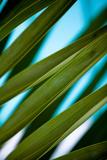 Palma IV Reprodukcja zdjęcia autor Susan Bryant