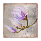 Magnolia on Silver Leaf I Posters by Patricia Quintero-Pinto